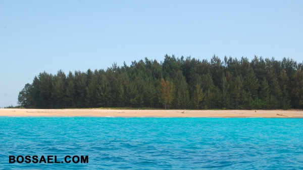 Salibungot Beach :: Pine Trees, Golden Grain Sand, and Turquoise Waters.